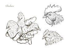 Gezeichneter Satz der Vektorhühnerzucht Hand Stockbilder