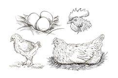 Gezeichneter Satz der Vektorhühnerzucht Hand Stockfotos