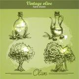 Gezeichneter Satz der Weinlese Hand des Olivenbaums und der Flasche Laptop- und Blinkenleuchte Stockfotos