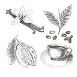 Gezeichneter Satz des Vektors Hand mit Nachtisch-Gewürzen Nette Vögel eingestellt Retro- Sammlung Vanille, Kakao, Kaffeebohnen Lizenzfreie Stockbilder