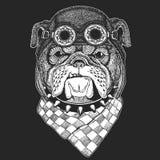 Gezeichnetes Weinlesebild der Bulldogge bessern Hand für T-Shirt, Tätowierung, Emblem, Ausweis, Logo, kühlen tragenden Tierfliege lizenzfreie abbildung