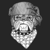 Gezeichnetes Weinlesebild der Bulldogge Hand für T-Shirt, Tätowierung, Emblem, Ausweis, Logo, Flecken vektor abbildung