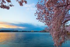Gezeiten- Becken an der Dämmerung im Washington DC, während Cherry Blossom Festivals stockbild