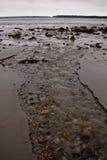 Gezeiten, die vom Strand in Maine erlöschen Lizenzfreie Stockfotos