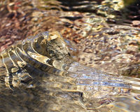 Gezeiten-Pool-Kräuselung Stockfotos