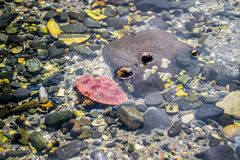 Gezeiten-Poolgeschöpfe im Bar-Hafen, Maine lizenzfreie stockbilder