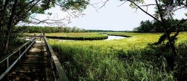 Gezeiten- Sumpfgebiet in Maine stockfotografie