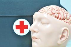 gezicht à ¹ ‰ van menselijk anatomiemodel Stock Foto