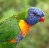 Gezicht 1 van de regenboog royalty-vrije stock foto's