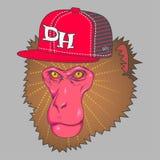 Gezicht die van de kunst het roze aap een rad GLB dragen Stock Fotografie