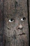 Gezicht in hout 3 Royalty-vrije Stock Fotografie
