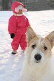 Gezicht van een hond stock foto