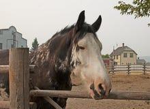 Gezicht van oud teruggetrokken Paard royalty-vrije stock afbeelding