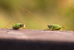 Gezicht weg, de Stijl van het Insect Royalty-vrije Stock Afbeeldingen