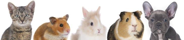 Gezichten van verschillende huisdieren Stock Foto's