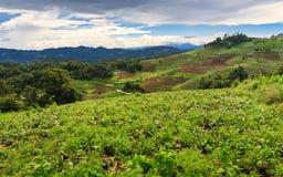 Gezichtspunt vanaf bovenkant van tropische berg Stock Foto