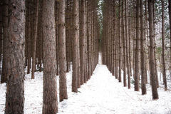 Gezierte Bäume Stockbild