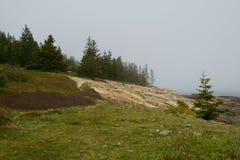 Gezierte Bäume auf dem Stein und dem Gras bedeckten Küstenlinie an einem nebeligen Morgen Stockbilder