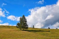 Gezierte Bäume auf Wiese über blauem Himmel Lizenzfreie Stockfotos