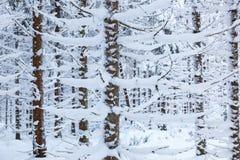 Gezierte Bäume im Schnee Lizenzfreies Stockbild