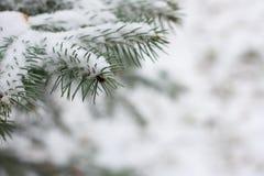Gezierte Zweige mit Schnee Stockfotos