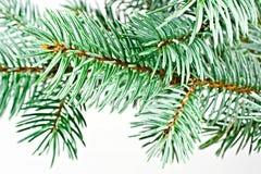 Gezierter Baum. Lizenzfreie Stockfotos