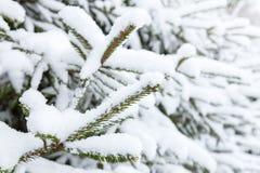 Gezierter Baum abgedeckt mit Schnee Stockbild