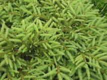 Gezierter Baum Alaska Lizenzfreies Stockfoto
