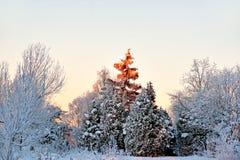Gezierter Baum in der Winterlandschaft Lizenzfreie Stockfotografie