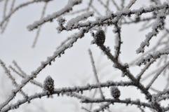 Gezierter Baum des Winters mit Schnee auf den Niederlassungen Stockbild