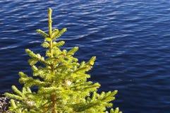 Gezierter Baum durch Wasser stockfotos