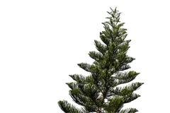 Gezierter Baum getrennt auf Weiß Stockbilder