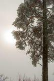 Gezierter Baum im Winter mit der Sonne, die hinter den Wolken hinaufklettert Stockfoto