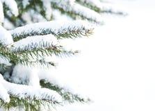 Gezierter Baum mit frischem Schnee Stockbild
