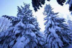 Gezierter Baum mit Schnee Stockbild