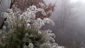 Gezierter Baum mit Winterdekorationen Stockfoto