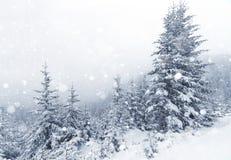 Gezierter Baum nebeliger Forest Covered durch Schnee in der Winter-Landschaft Lizenzfreie Stockfotografie