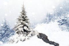 Gezierter Baum nebeliger Forest Covered durch Schnee in der Winter-Landschaft Stockbild