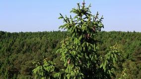 Gezierter Baum stock footage
