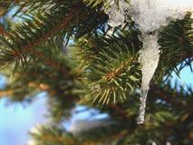 Gezierter Baum-Zweig mit Eiszapfen Lizenzfreie Stockbilder