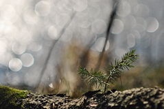 Gezierter Baumsämling in einem Frühlingslicht stockbilder