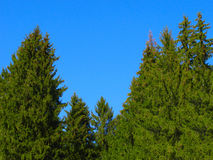 Gezierter Wald Stockfotos