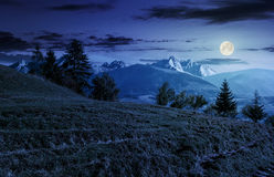 Gezierter Wald auf grasartigem Abhang in den tatras nachts Stockfoto