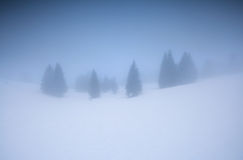 Gezierter Wald im Winterberg am nebeligen Morgen stockbilder