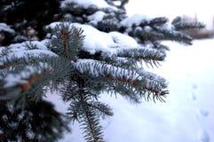 Gezierter Winter des Zweigs Lizenzfreies Stockfoto