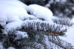 Gezierter Winter des Zweigs Stockbilder