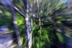 Gezoem in een bos met hoge snelheids geweven achtergrond Royalty-vrije Stock Fotografie