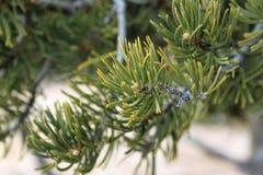 Gezoem van een boom/een tak stock afbeelding