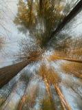 Gezoemeffect bomen Royalty-vrije Stock Afbeeldingen
