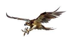 Gezogener angreifender Falke auf einem weißen Hintergrund Lizenzfreie Stockfotografie